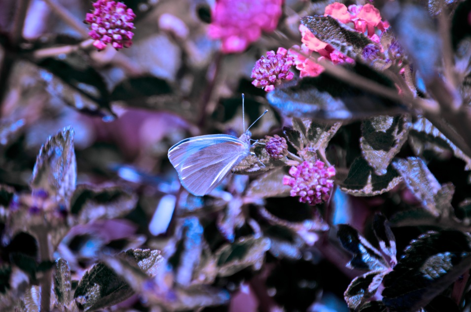 Her butterflies remained, but turned black and white except one: chlorine blue.